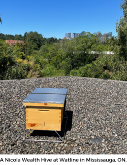 Nicola Wealth's Beehive on A Rooftop in Ontario